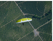 Above lemon trees in Tucuman :: Paragliding above lemon trees plantation, Tucuman, Argentina