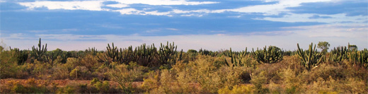 Argentinian pampas :: Shrubland plains between Famatina and La Cumbre Argentina